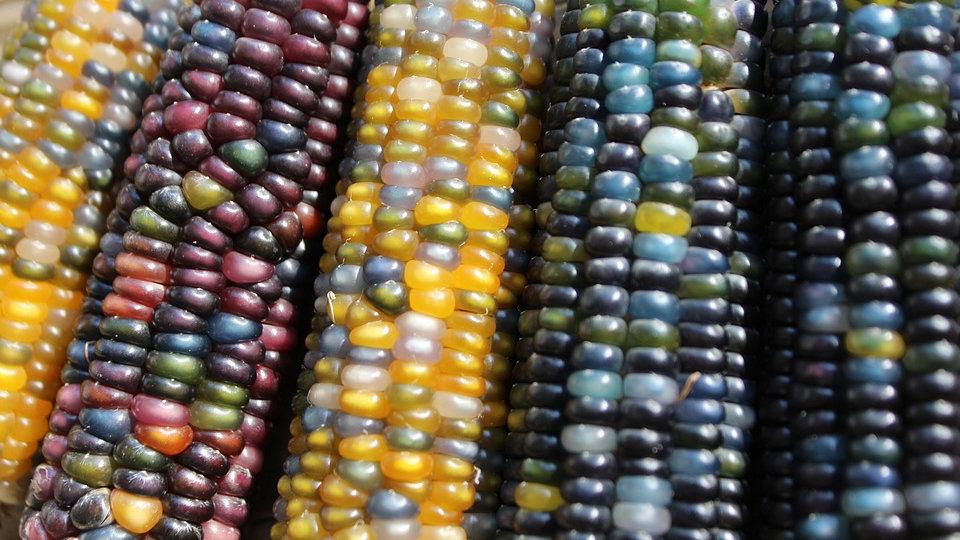 Popcorn - Mini Ornamental Rainbow