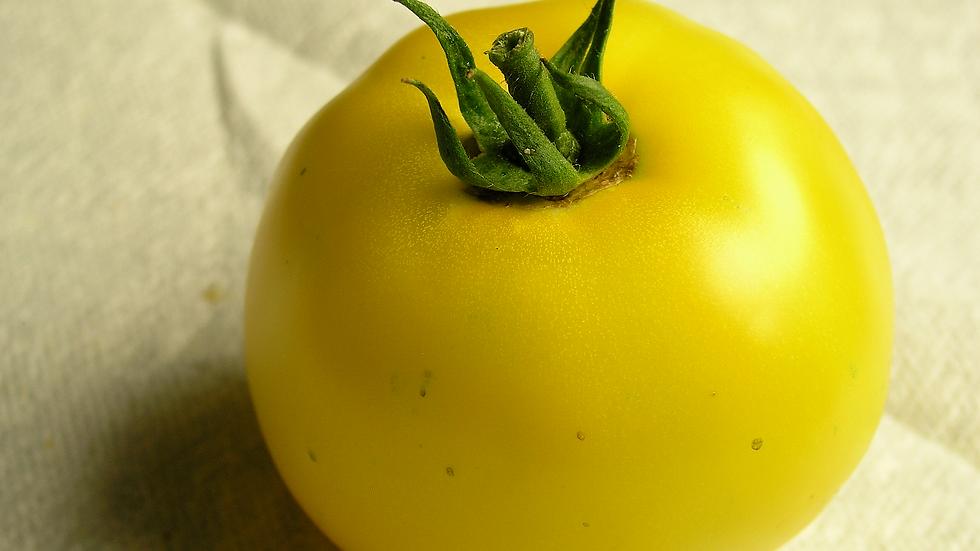Tomato - Lemonboy