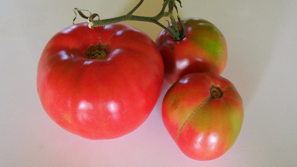 Tomato - Brandywine