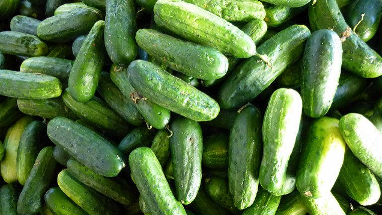 Cucumber - Alibi