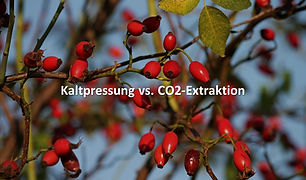 Hagebuttenöl Kaltpressung vs. CO2-Extraktion