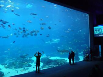 Public-Aquarium.jpg