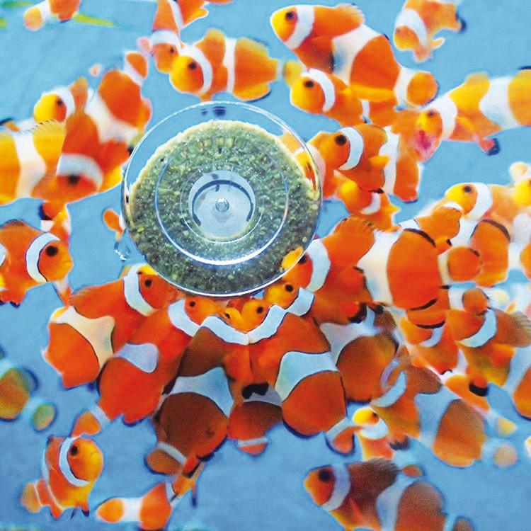 clownfish-grazer.jpg