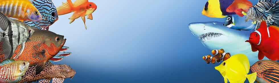web-banner-4.jpg