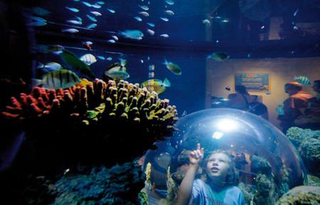 aquarium-bubble.jpg
