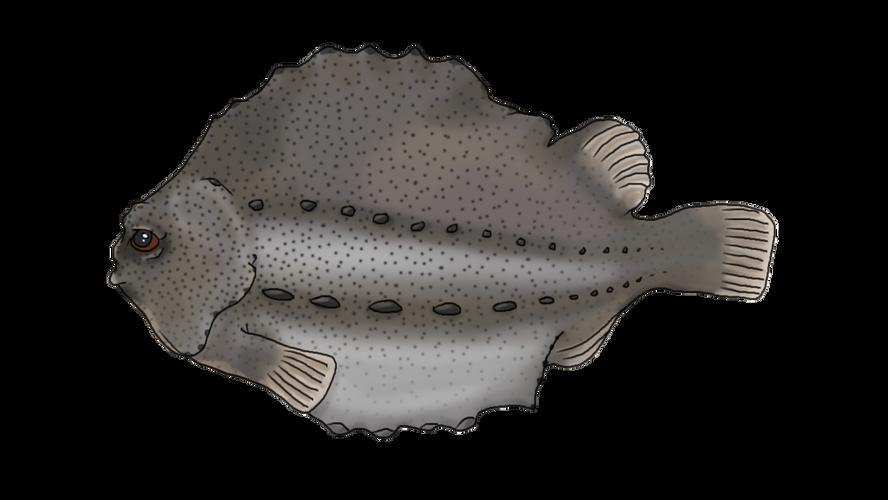 aquaculture-lumpfish.png
