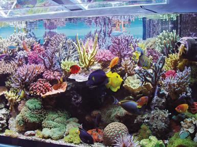 reef-tank.jpg