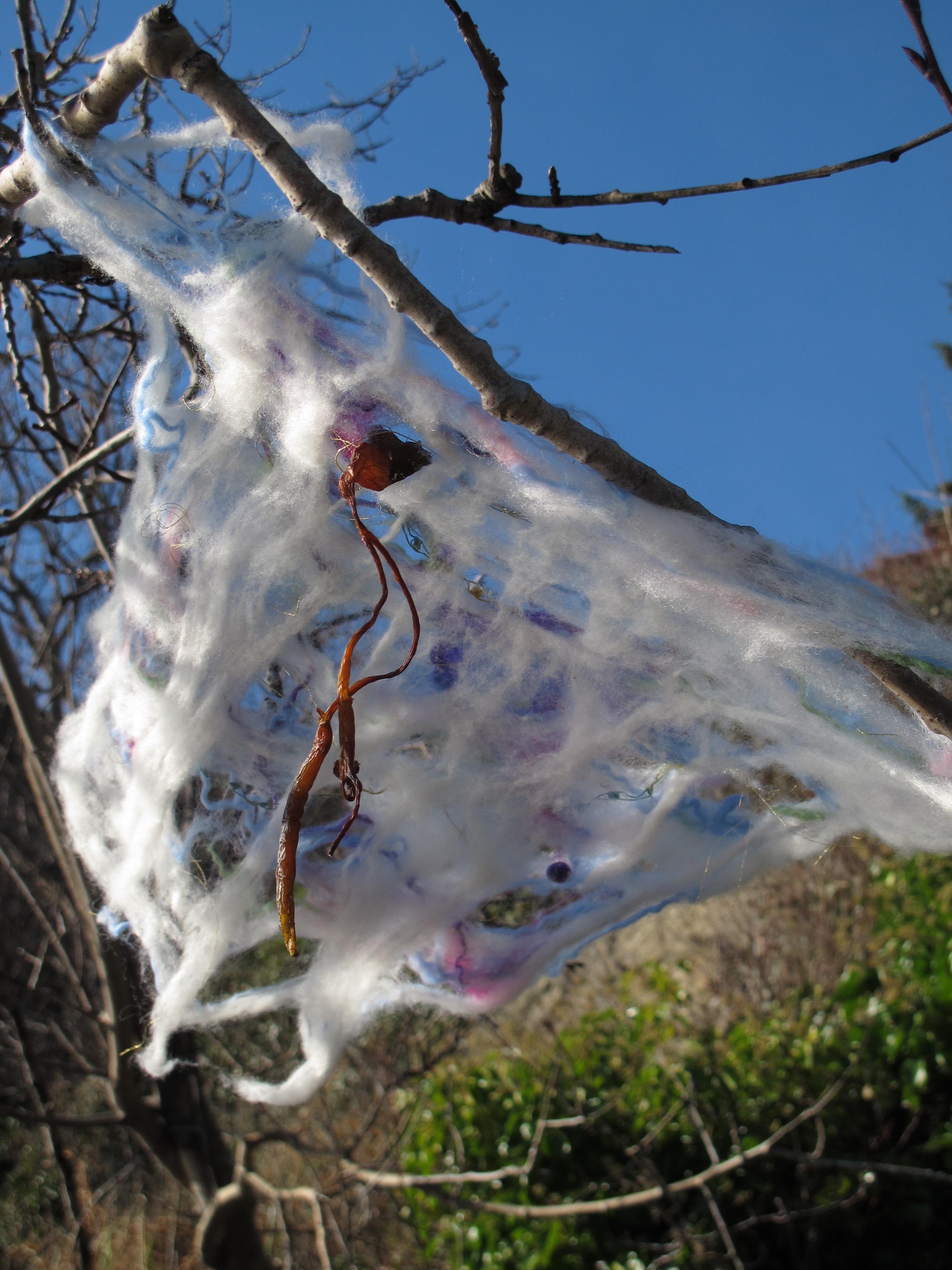 wool web