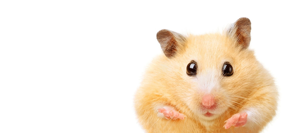 Creative-Insite Hamster
