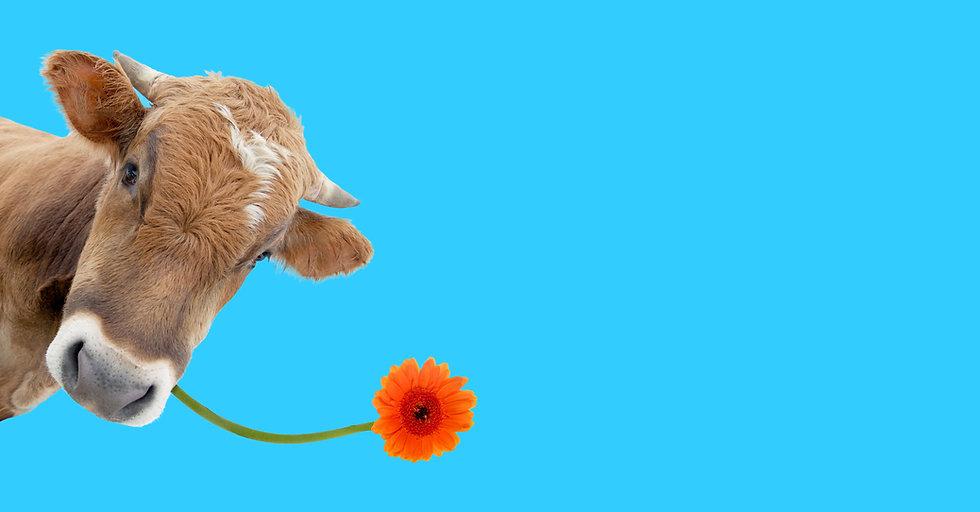 Cow & Flower2.jpg