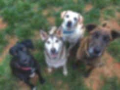 Dogs in yard_edited.jpg