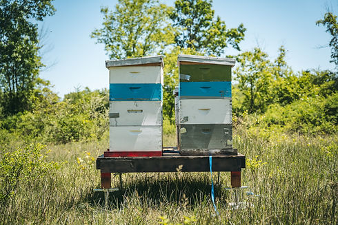 aberdeen-apiary-drewmason-june2020-2.jpg