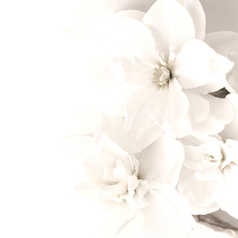 Canva%252520-%252520White%252520Flowers%
