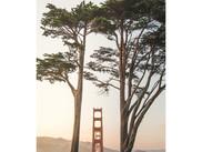 bridge between trees.jpg