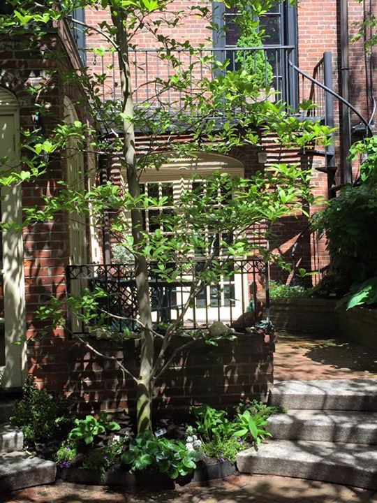 West Cedar St Garden | Beacon Hill