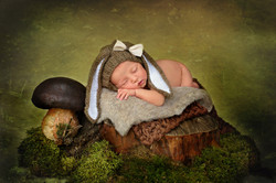 newborn photography bunny