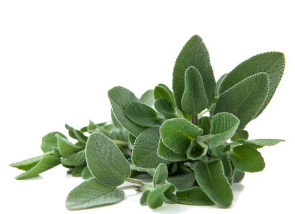 Salvia - 50g