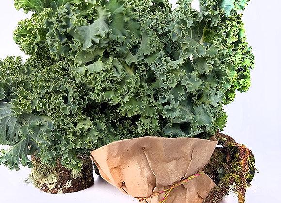 Kale Crespo Verde - 150g