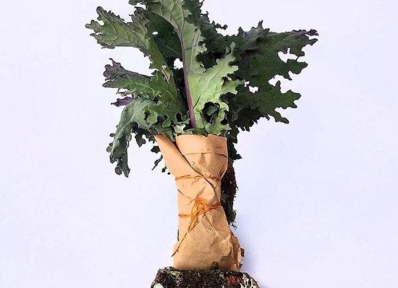 Kale Arcoiris - 150g