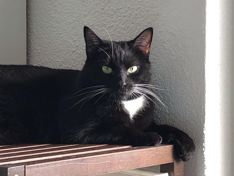 Tierbetreuung Katze/n