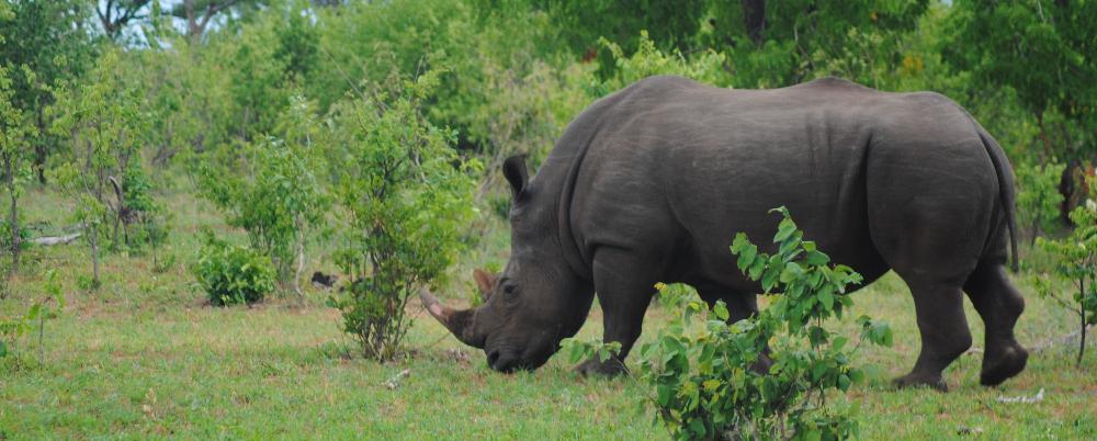 in Gorongosa Natioal Park