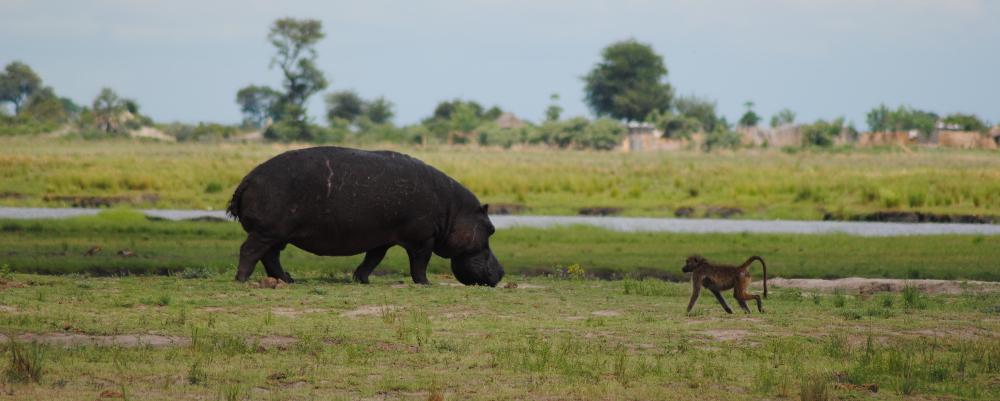 About Safaris