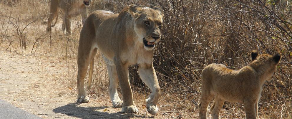 in Kruger National Park