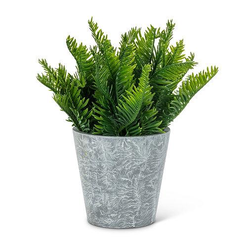 Fern Leaf Plant Pot