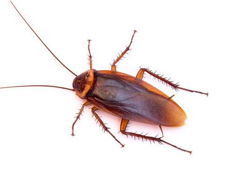 Roach Preparation Sheet