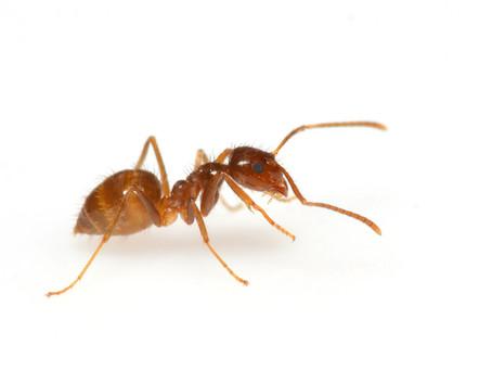 Indoor general pest preparation sheet