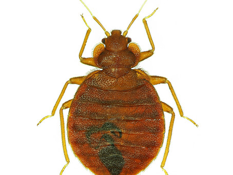 Bed Bug Treatment Preparation Instructions