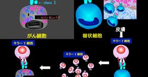 (神經膠質瘤)WT1胜肽抗癌疫苗