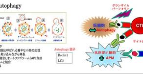 (癌症免疫療法)神奈川縣立癌症中心研究介紹(2/3)