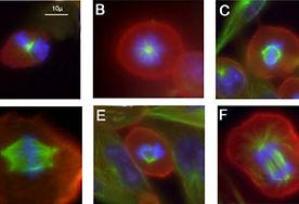 Immunohistochemicalstaining
