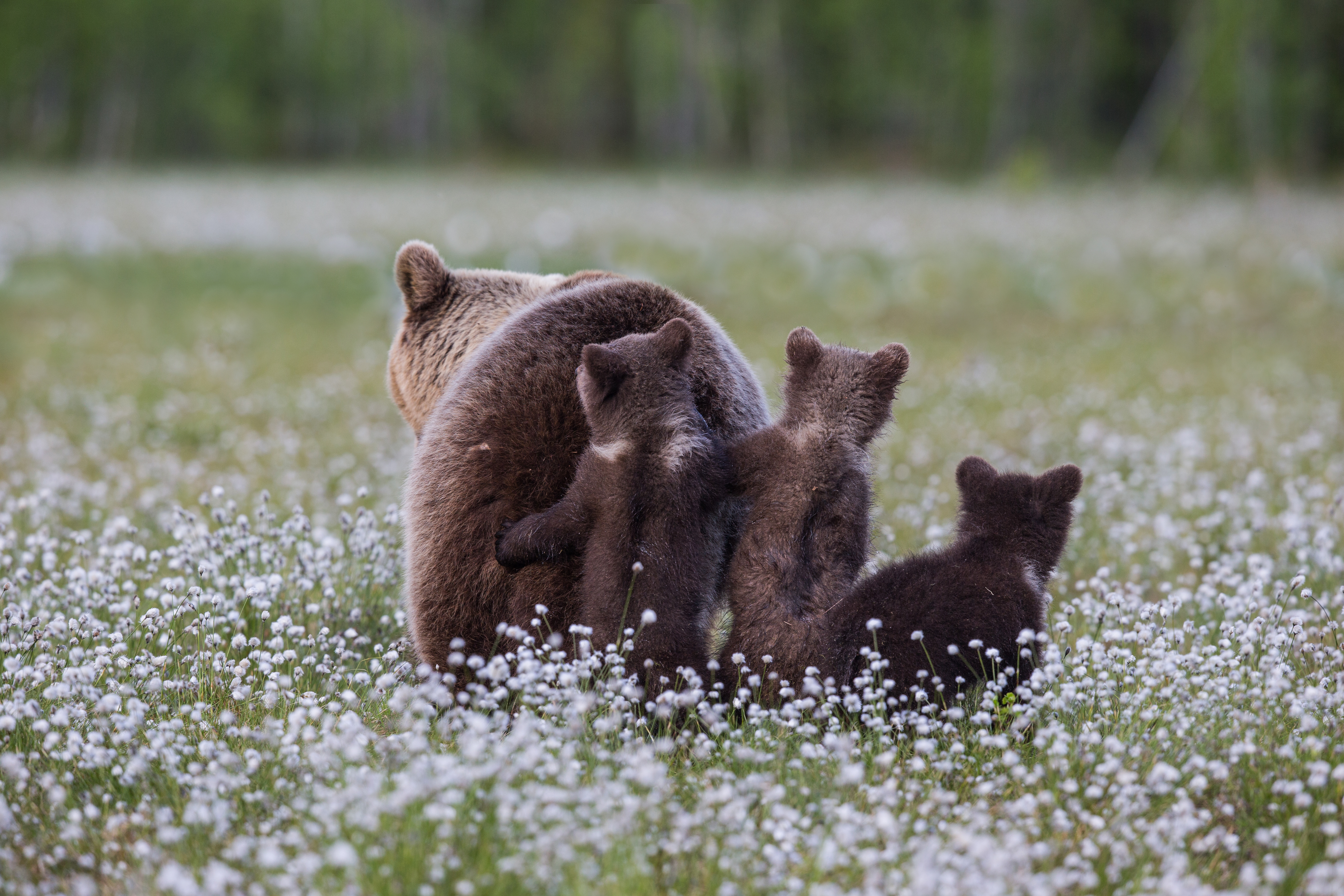 Terre d'ours