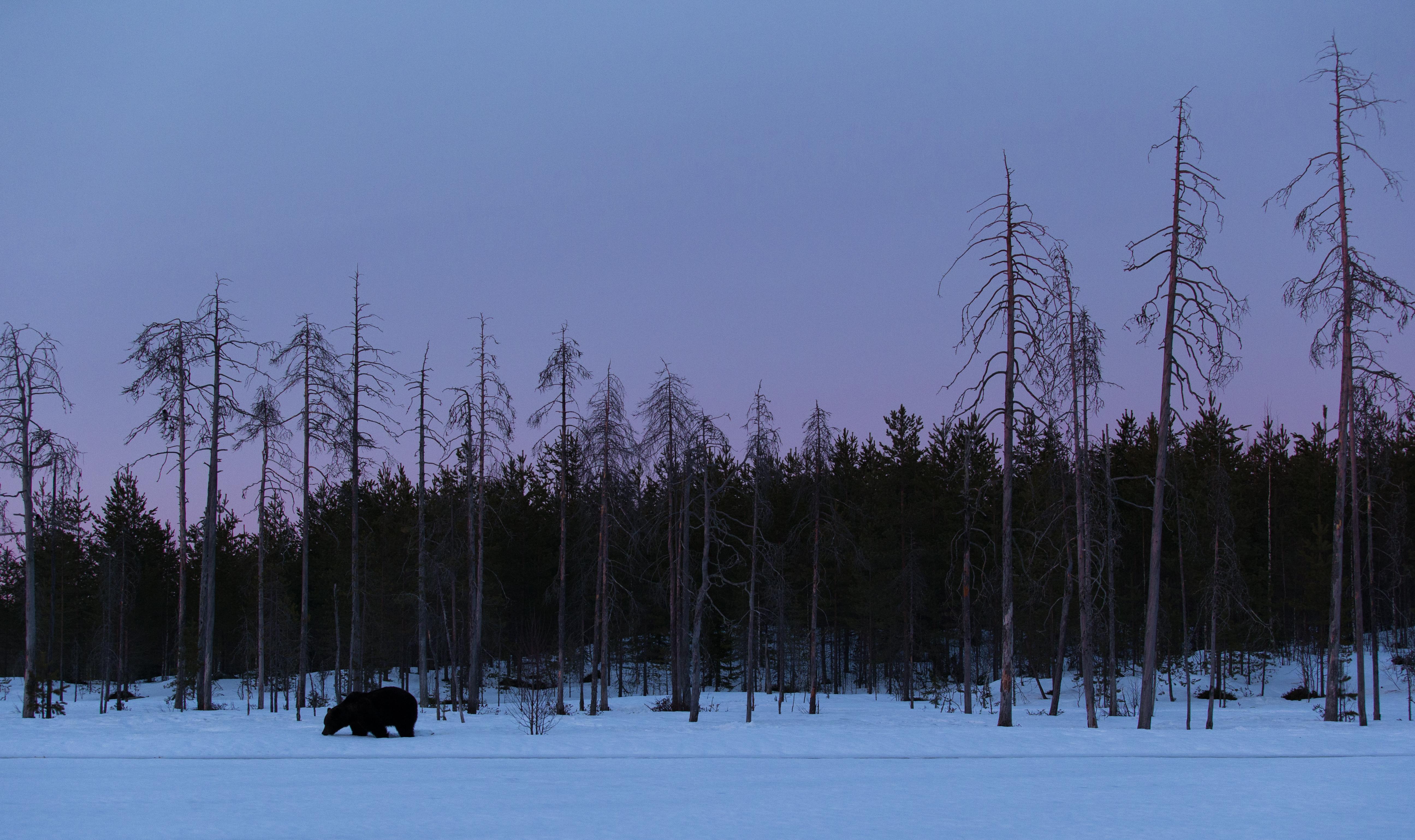 La nuit de l'ours
