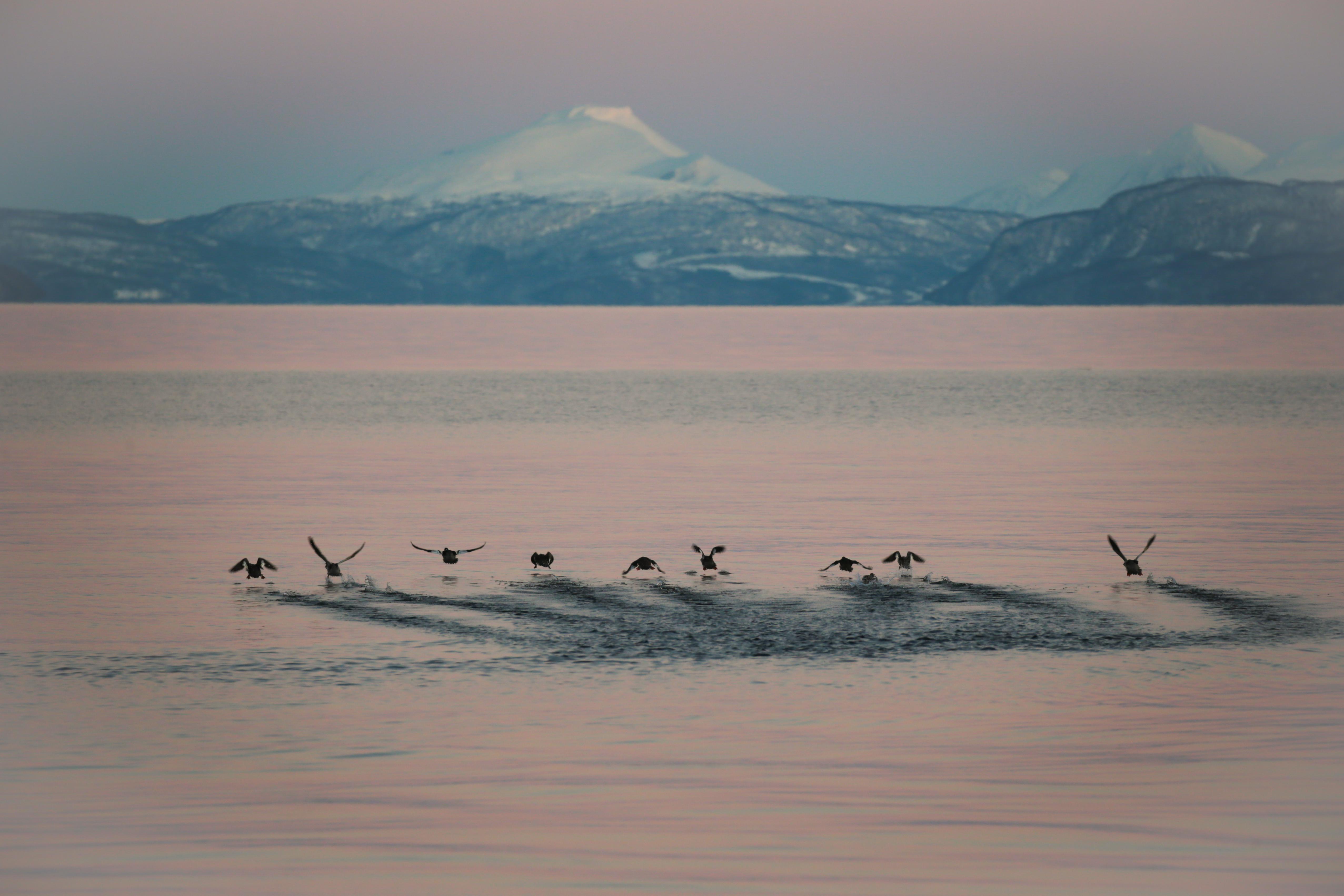 Envol - Ile de Senja Norvège