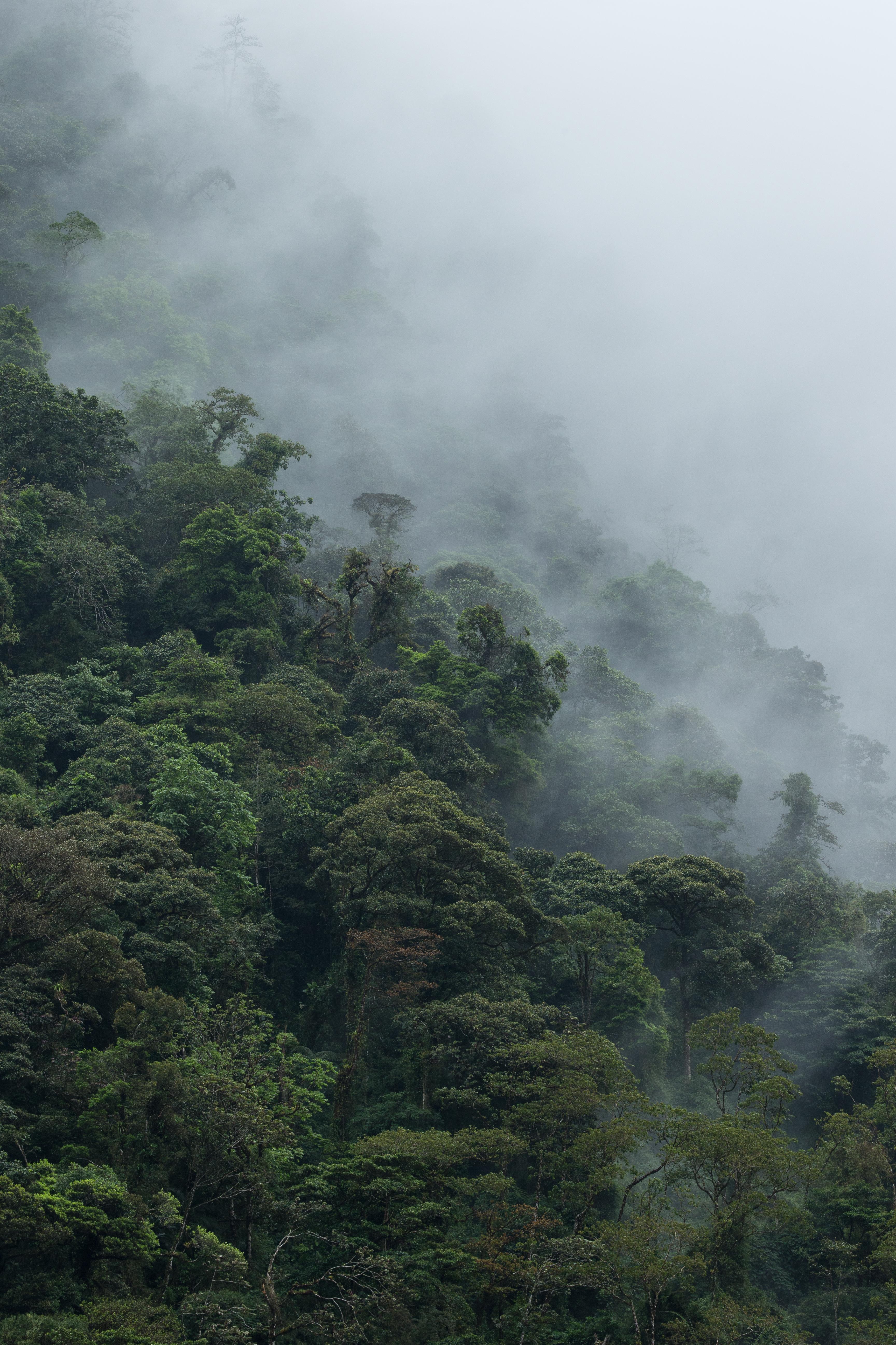 Forêt de nuages - Costa Rica