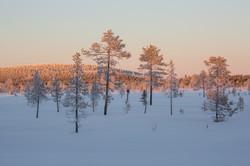 Taïga finlandaise