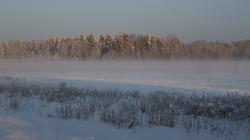 Forêt de Bialowieza - Pologne