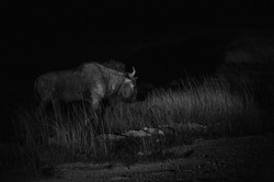 Namibie night David Wolberg