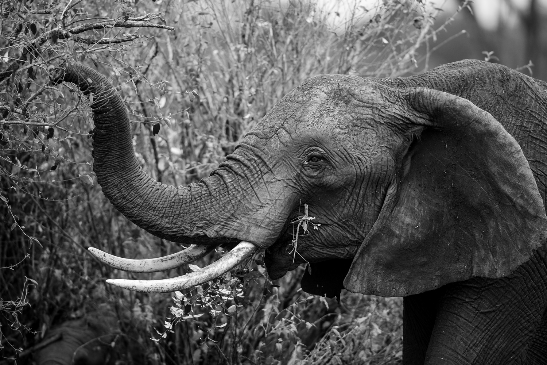 Kenya - David Wolberg