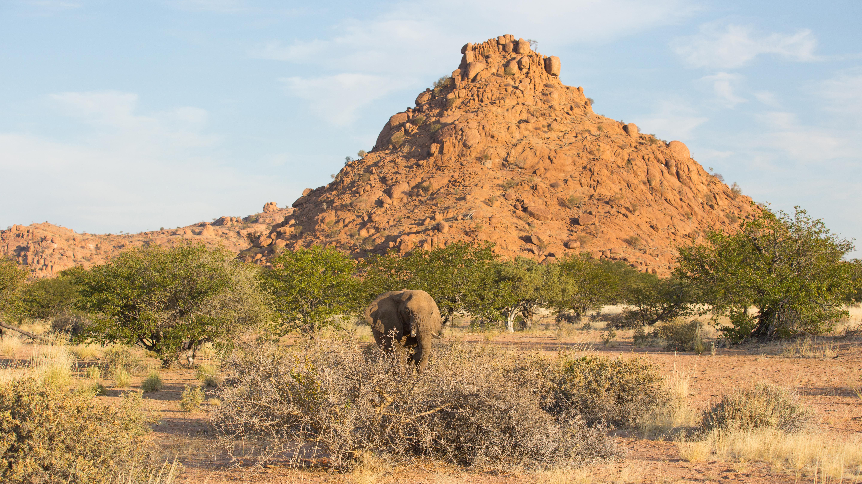 Eléphant du désert