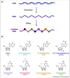 Protein-based mol recognition tools.jpg