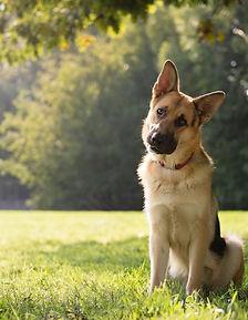 Dog_Park_Signs-540x697.jpg