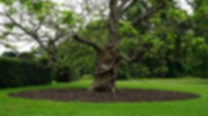 Lawn Care 2.jpg