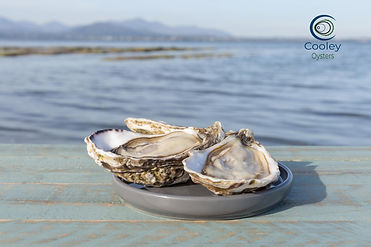Cooley-Oysters-39 with logo.jpg