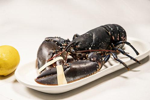 1lb Live Ancient East Lobster