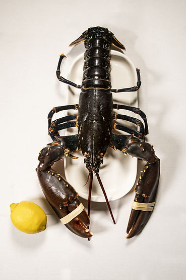 Large Lobster1.jpg