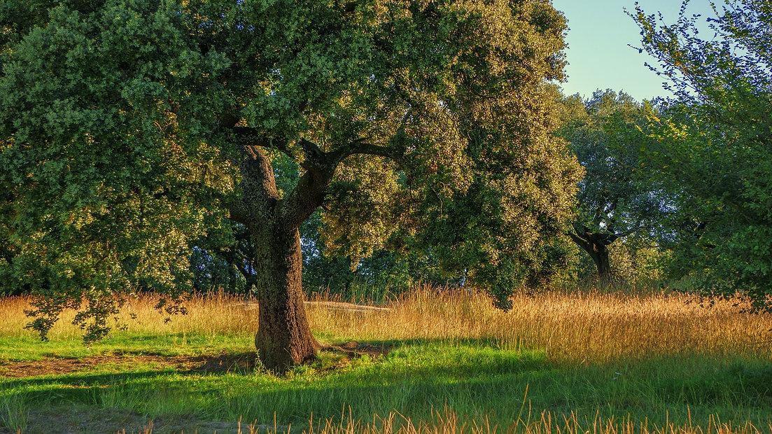 Plant-an-oak-tree-1-.jpg